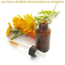 fleurs de bach et réflexologie -drôme ardèche, mal être, jalousie, fatigue, égoïste.